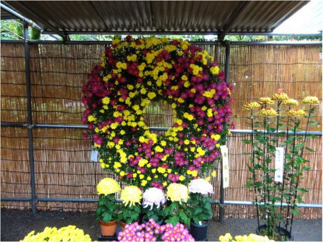総合花壇菊