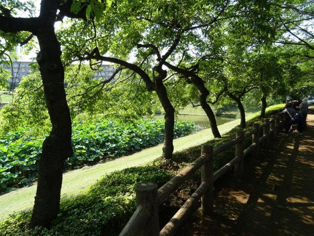 小畔水鳥の郷公園