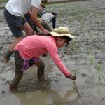 泥の感触を楽しんでみんなで力を合わせて米作り〜かわごえ里山イニシアチブ(田植えイベント)〜