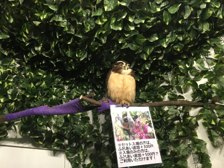 bamboopalm2owl