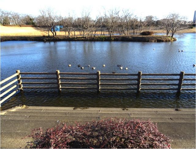 小畦水鳥の郷公園