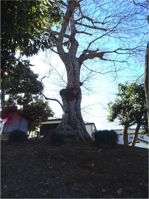 榎の木稲荷
