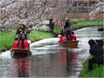 春の舟遊(ひらた舟)