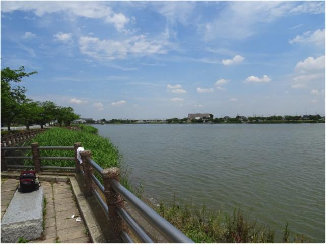 伊佐沼湖畔