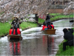 4/6 誉れ桜と舟遊