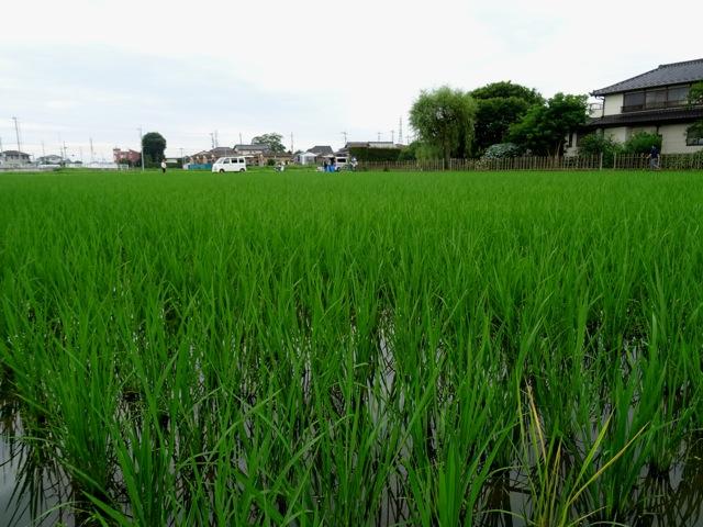 ikimono01
